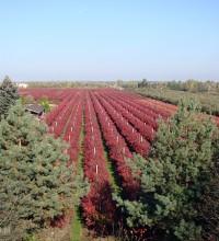 Plantacja jesienią